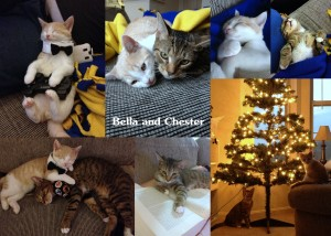 Bella and Chester